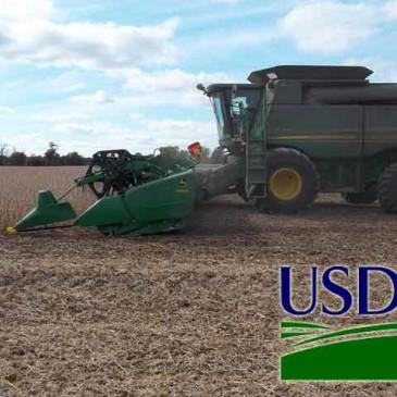 Wyprzedaż zbóż po raporcie USDA. Jak pozycjonować się?