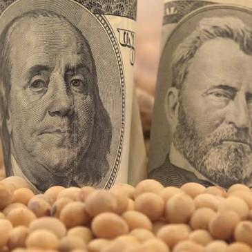 Amerykański eksport soi cierpi – wnioski po raporcie WASDE